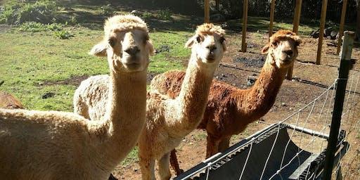 Sunday, July 14th, 2019 Alpaca Farm Visit