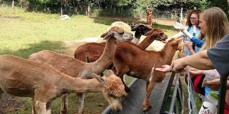 Sunday, August 4th, 2019 Alpaca Farm Visit tickets