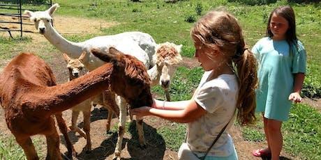 Sunday, August 18th, 2019 Alpaca Farm Visit tickets