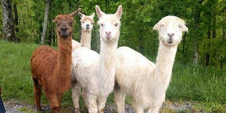 Sunday, September 8th, 2019 Alpaca Farm Visit tickets