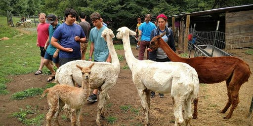 Sunday, September 29th, 2019 Alpaca Farm Visit