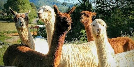 Sunday, October 20th, 2019 Alpaca Farm Visit tickets