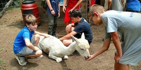 Sunday, October 27th, 2019 Alpaca Farm Visit tickets