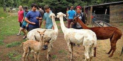 Sunday, November 3rd, 2019 Alpaca Farm Visit
