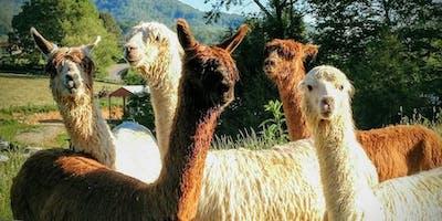 Sunday, November 10th, 2019 Alpaca Farm Visit