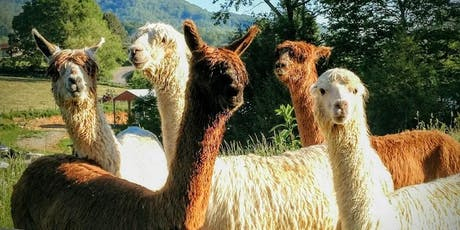 Sunday, November 10th, 2019 Alpaca Farm Visit tickets