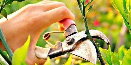 Pruning Fruit Trees Workshop tickets