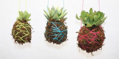 Hanging String Garden Workshop with Succulents