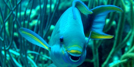 Reef Fish ID Course - Fishes of the Tropical Western Atlantic  tickets