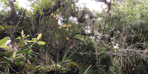Guided Barrier Island Sanctuary Hike