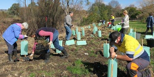 Gordon Hartsman Park community planting, Indian myna talk and Gardens for Wildlife roadshow