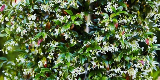 Plants that Make Scents-CH