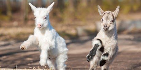 Baby Goat Yoga (Goga) tickets