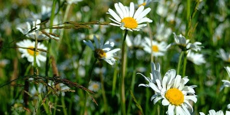 Badock's Wood Wildflower Meadows Walk tickets