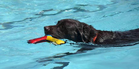 Beautiful Joe's ANNUAL Pooch Pool Party tickets