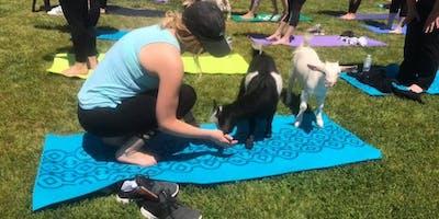Carolina Goat Yoga Class: June 30th 7-8pm