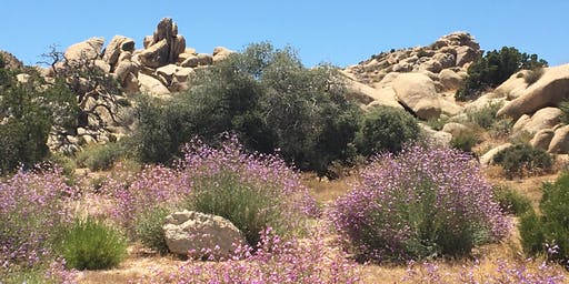 Introduction To Mindful Self-Compassion In The Desert!