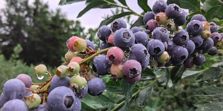 Blueberry Solstice Supper tickets