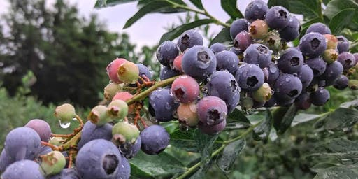 Blueberry Solstice Supper