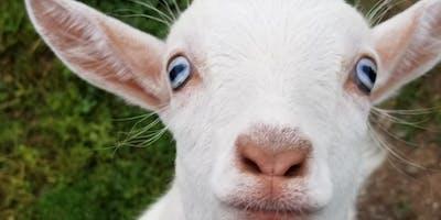 Carolina Goat Yoga Class: August 24th