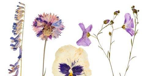 Flower Printing - Crap Craft Nights