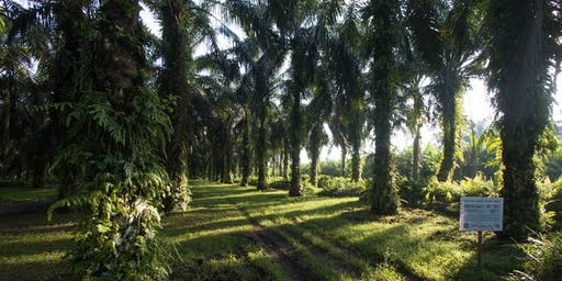 Sustainable Palm Oil Study Tour (Thailand) by Wild Asia