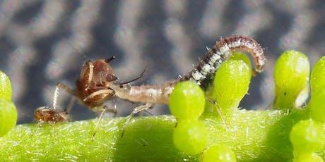 Integrated Pest Management  Wollongbar Masterclass tickets