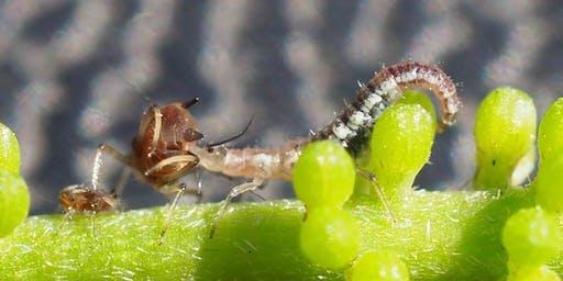 Integrated Pest Management  Wollongbar Masterclass