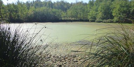 Balade récréative à l'ENS du marais de l'étang Bizadan billets