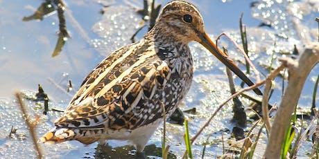 Beginner's Birding at RSPB Titchwell Marsh tickets