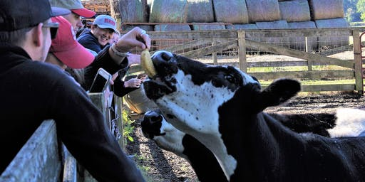 LEGEN-DAIRY Ninja Cow Farm