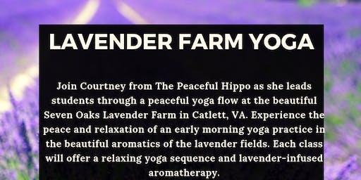 Lavender Farm Yoga -July 7th