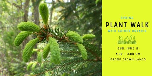 Spring Plant Walk - Orono Crown Lands