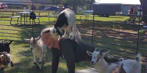 Goat Yoga Texas - Sun., June 16 @ 10:30AM