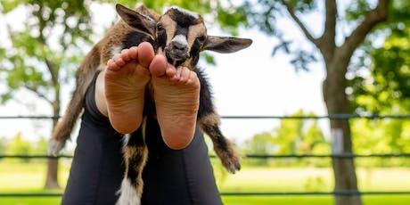 Goat Yoga Texas - Sun., June 23 @ 10:30AM tickets