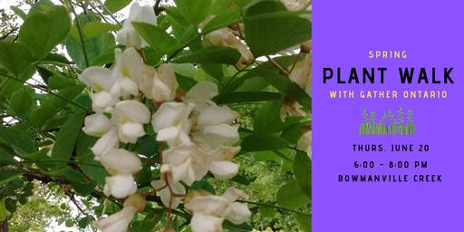 Spring Plant Walk - Bowmanville Creek