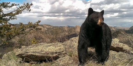 Our Wild Colorado: Living with Black Bears tickets