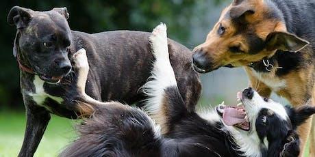 Abendvortrag Calming Signals - Hundesprache verstehen Tickets
