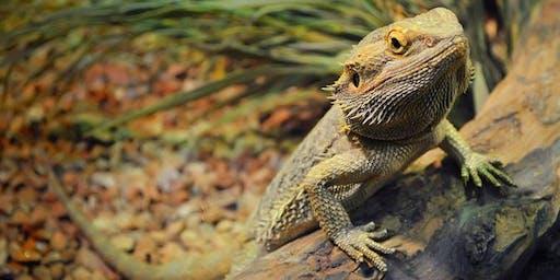 The Reptile Show