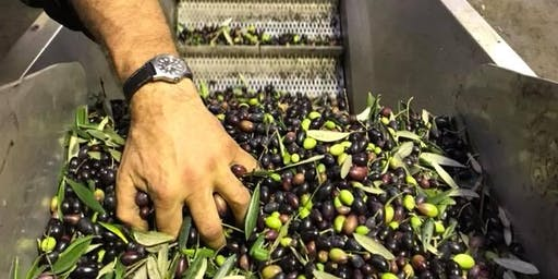 Olives and their oils