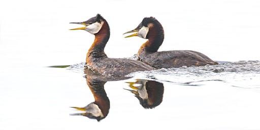 June 5-10, 2020: Alaska:  Birds and Mammals of the Kenai Peninsula