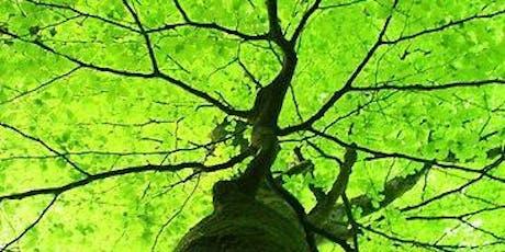 Bain de forêt & Pleine Conscience billets