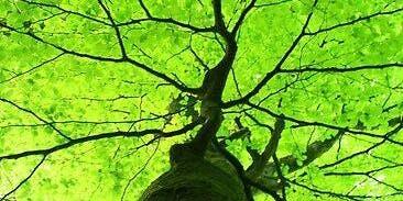 Bain de forêt & Pleine Conscience