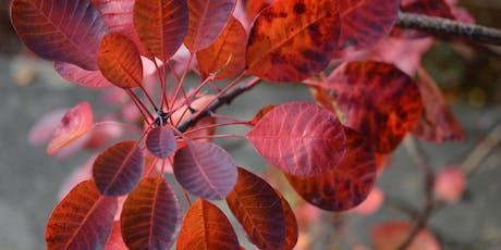 Tymhorau yn yr Ardd - Hydref | Seasons in the Garden - Autumn tickets