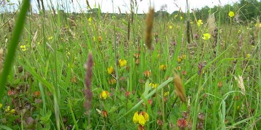 Creating Wildflower Rich Grasslands