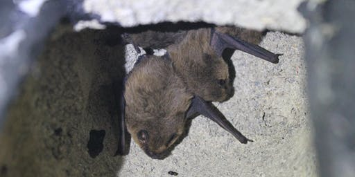 Highgate Wood Bat Watch Walk