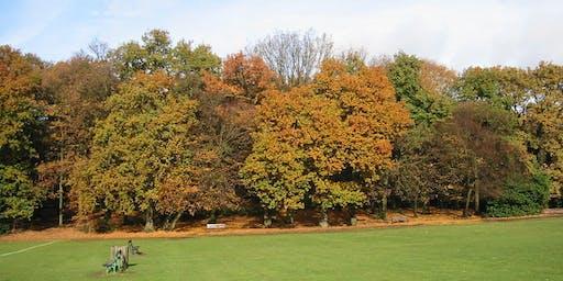 Highgate Wood in Summer