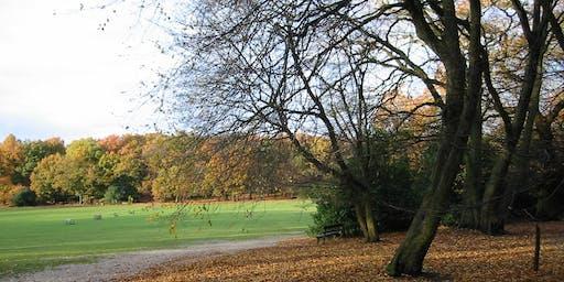 Highgate Wood in Autumn