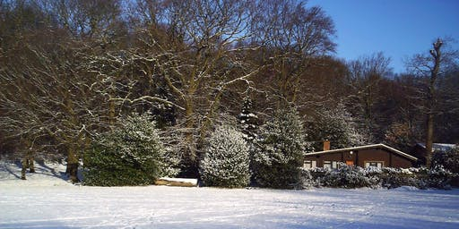 Highgate Wood in Winter
