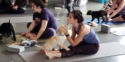 Doggy Noses & Yoga Poses - Jersey Growl Barks and Brews With A Bend!